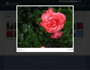 inchoo-flickr-gallery-photoset-photo